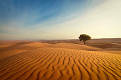 lonely tree and waves of sand in the wahiba sands desert of oman.
