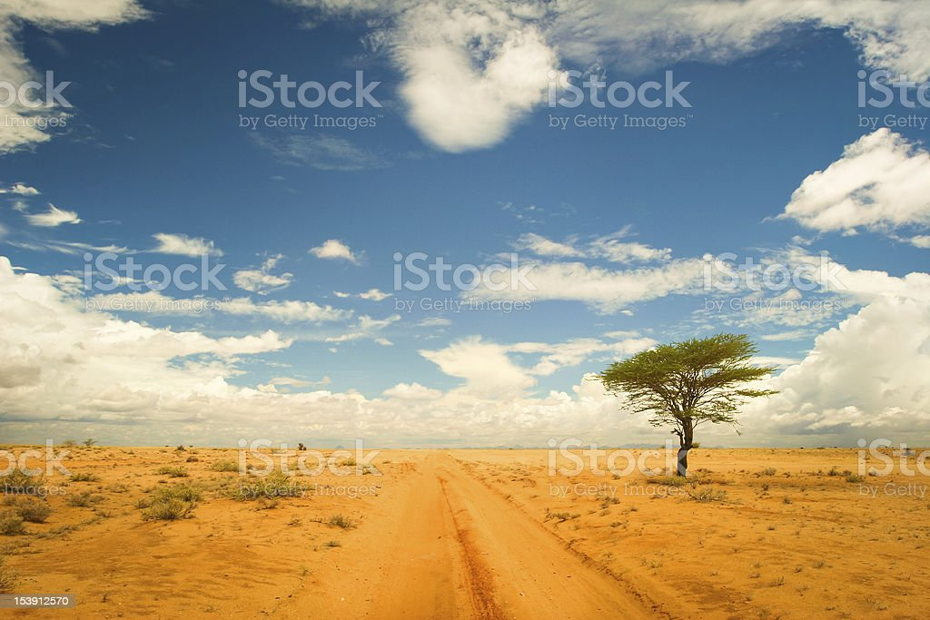 Lonely tree in the dessert stock photo