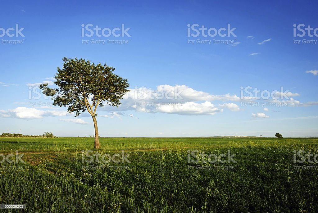 lonely tree in the grasslands royalty-free stock photo