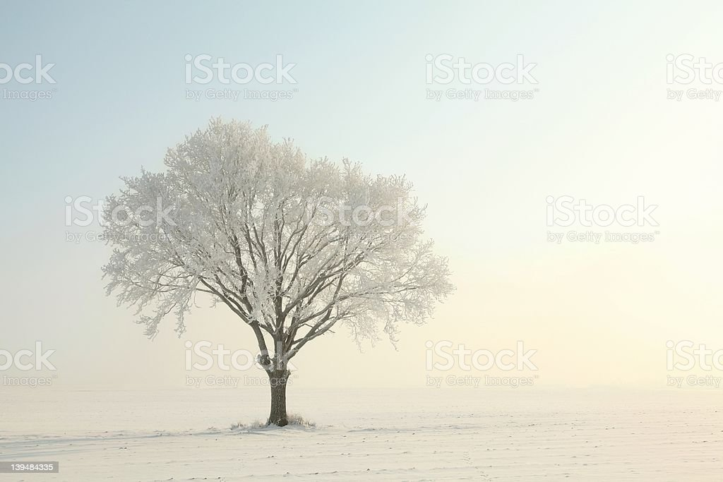 Lonely tree in the morning royalty-free stock photo