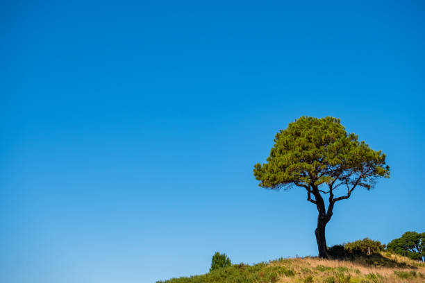 A lonely tree in the nature with blue sky in summer. stock photo