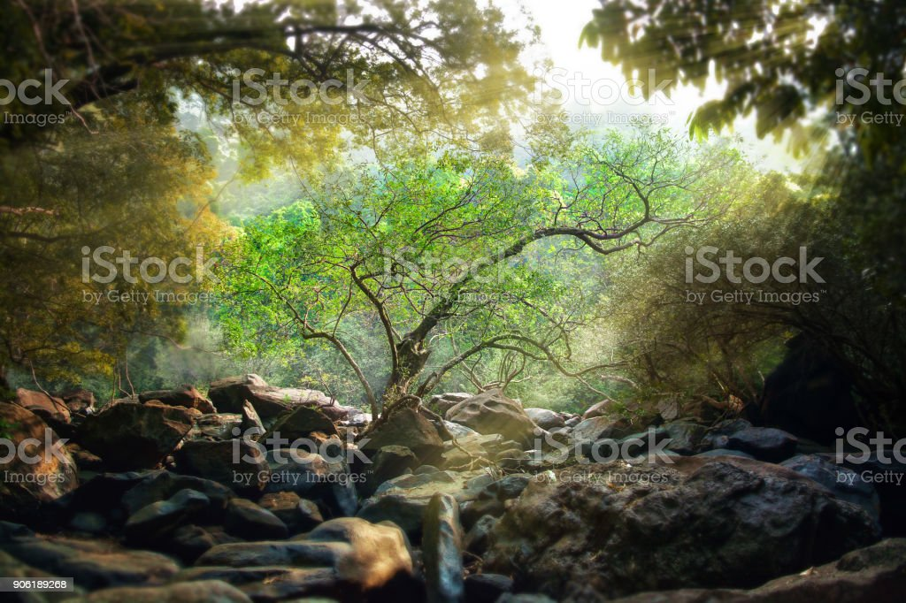 Lonely green tree in the rays of the sun growing in the forest on the...