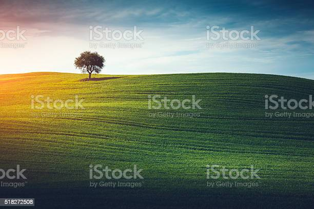 Photo of Lonely Tree In Tuscany
