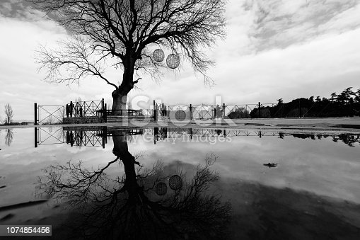 istock lonely tree in water reflection long exposure 1074854456
