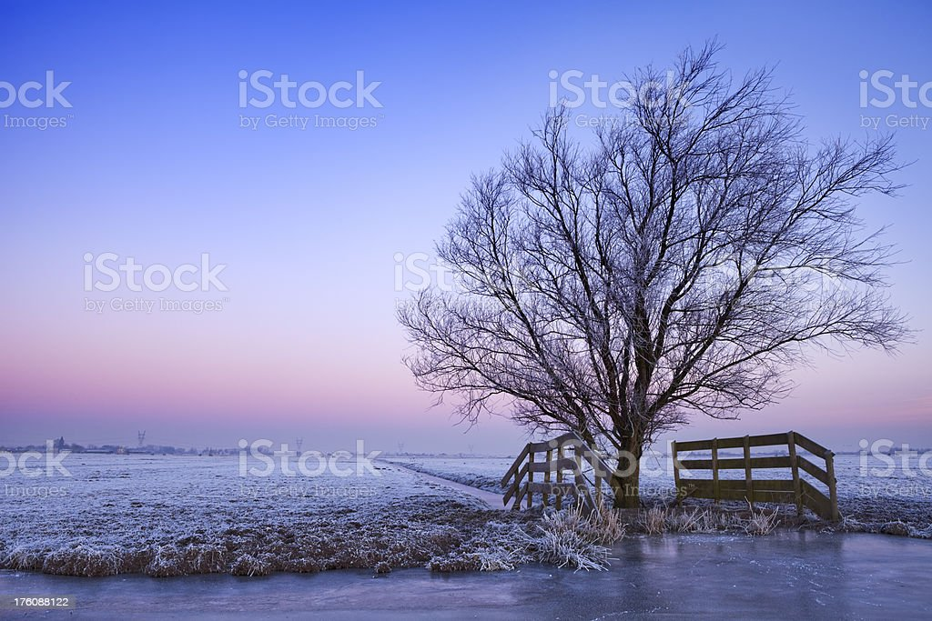 Lonely tree in winter landscape in The Netherlands at dawn royalty-free stock photo