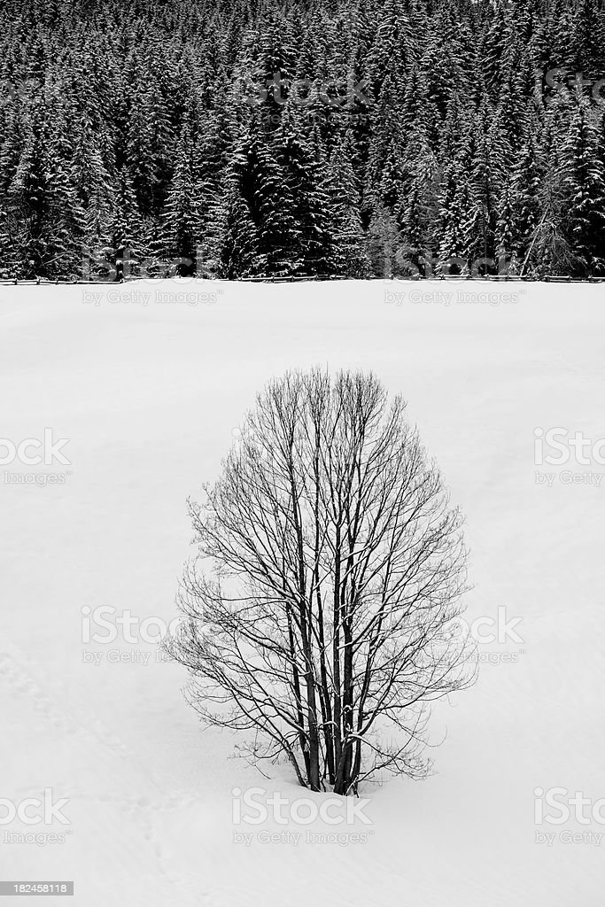 Lonely tree in winter royalty-free stock photo