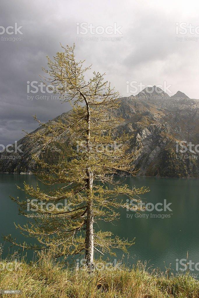 lonely tree near  lake royalty-free stock photo