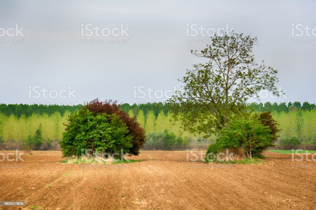 Lonely tree on a field foto de stock royalty-free