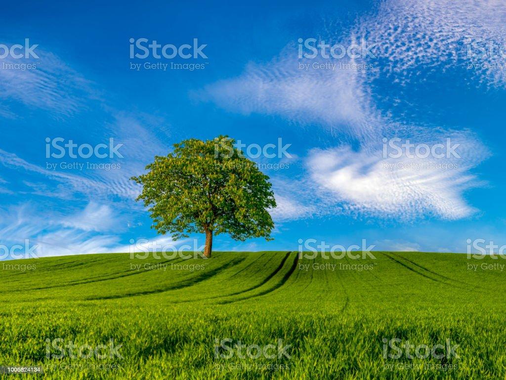 arbre solitaire sur un champ vert - Photo