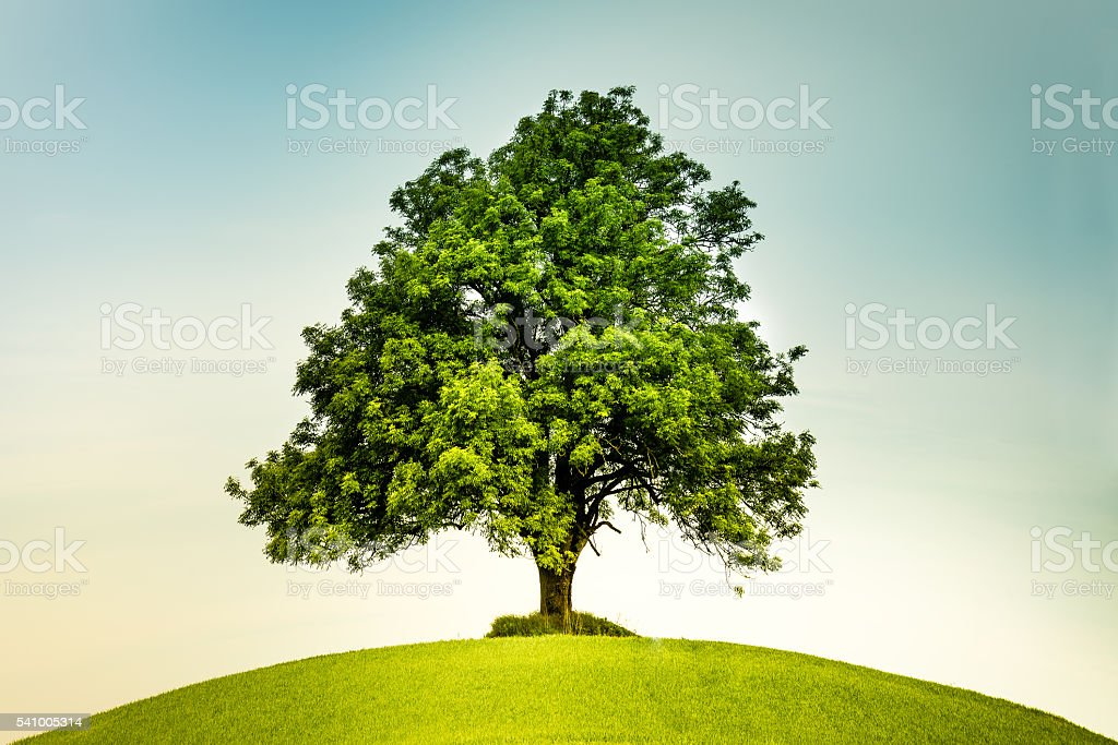 Lonely tree on a green hill stock photo