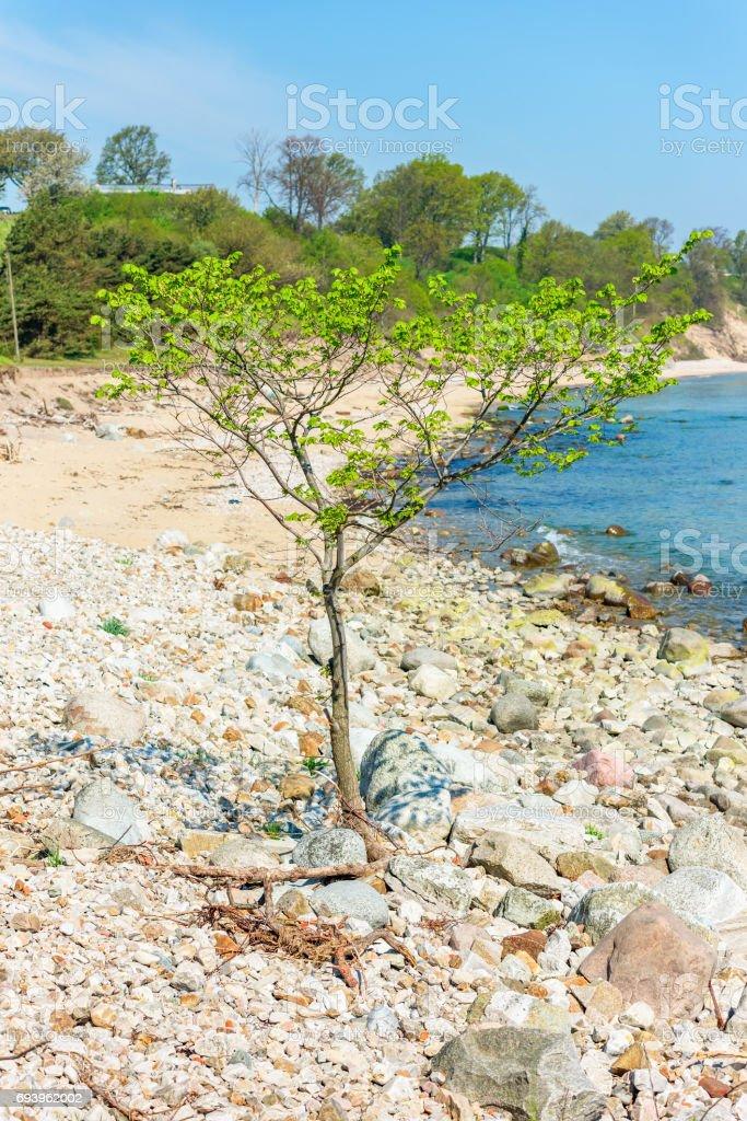 Lonely tree on beach stock photo