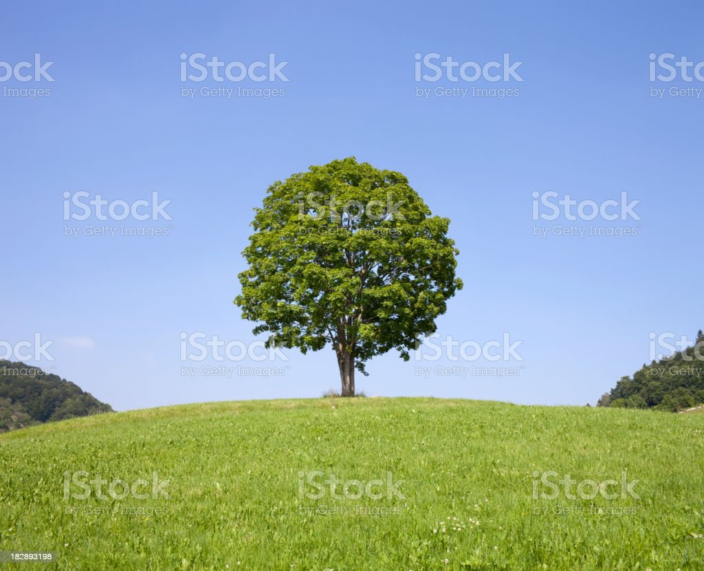 Lonely tree on green field stock photo