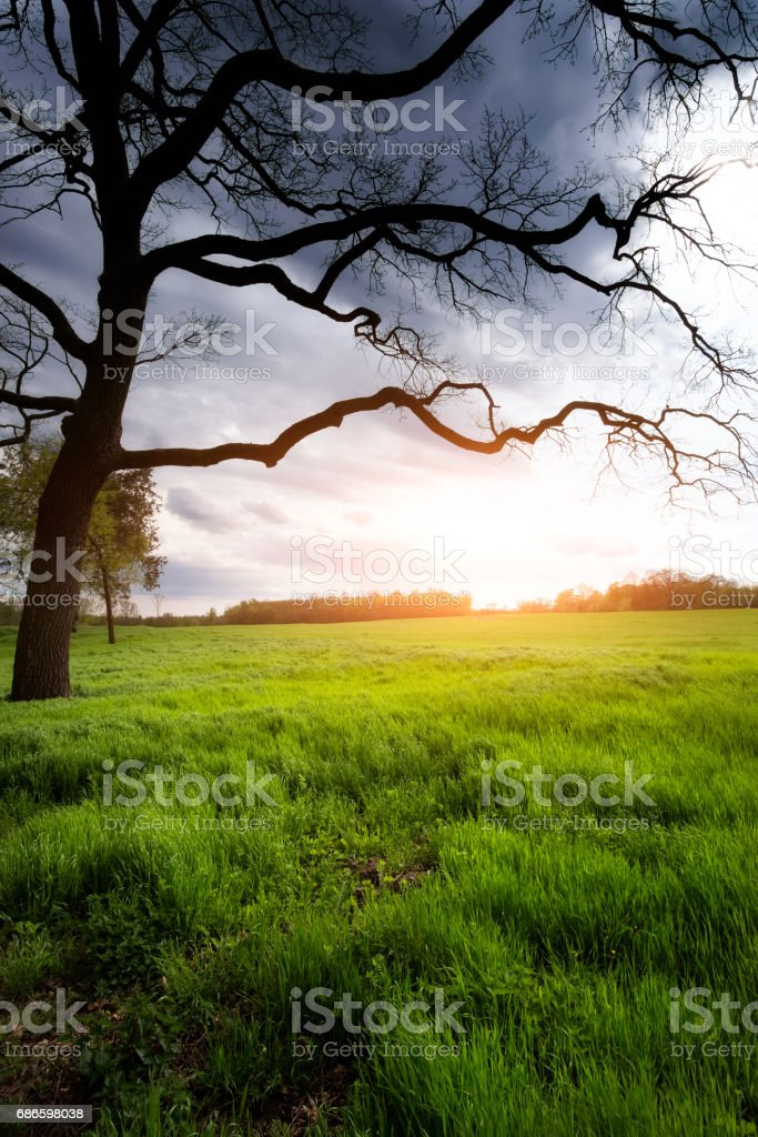 Lonely tree on sunny meadow royalty-free stock photo