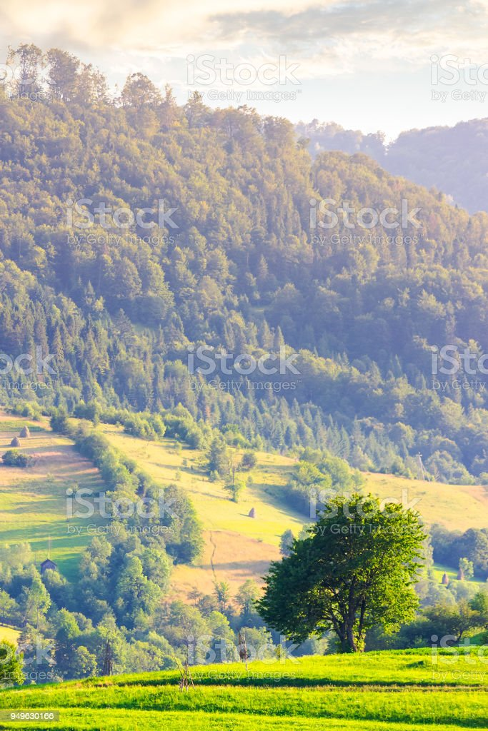 lonely tree on the grassy field in mountains stock photo