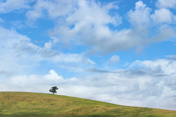 Lonely tree on the green hill. Serenity and happiness concept. stock photo