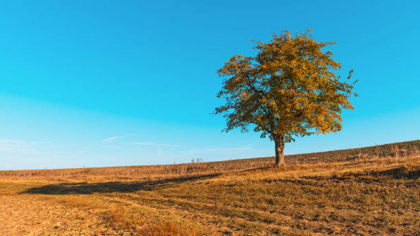 Lonely Tree on the Hill stock photo