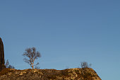 Single tree on top of a mountain hill in sunset with clear blue sky