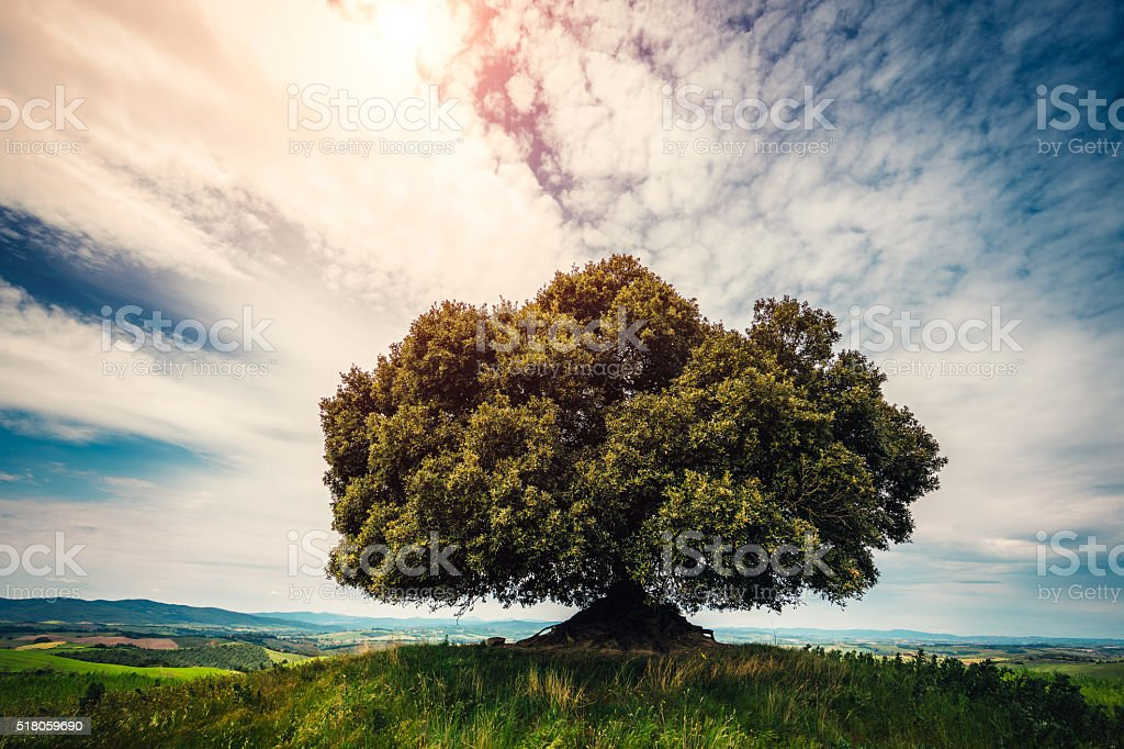 Lonely Tree On Top Of The Hill stock photo