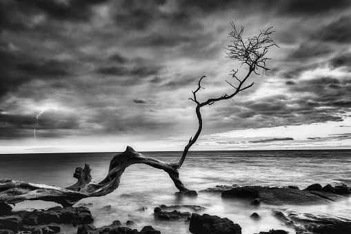 Black and white of tree branch in ocean at sunset during storm.