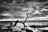istock Lonely Tree 1272702144