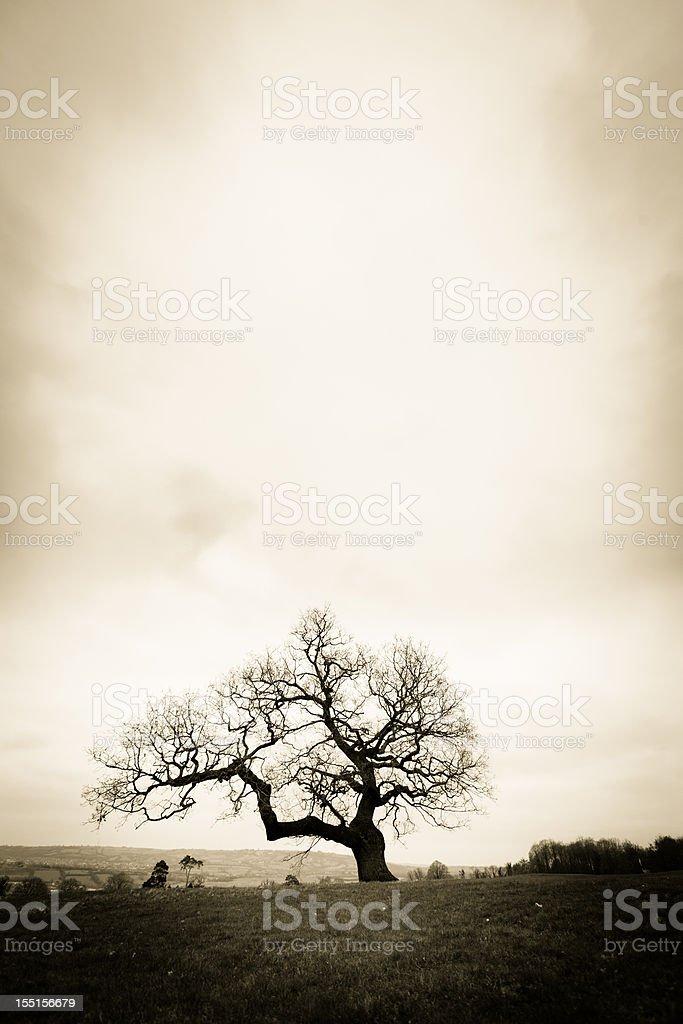 Lonely árvore - foto de acervo