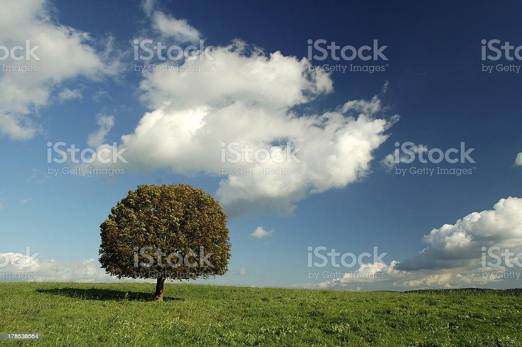 Einsame Baum – Foto