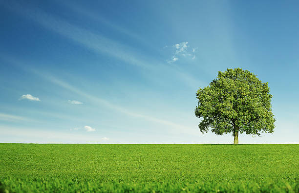 lonely tree - single pampas grass bildbanksfoton och bilder