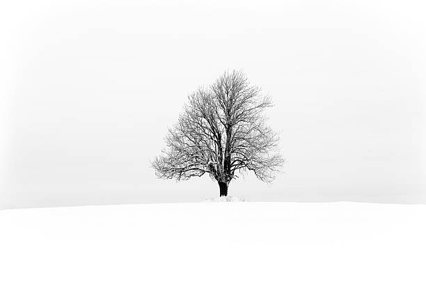 lonely tree - deciduous stock pictures, royalty-free photos & images