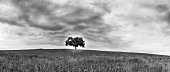 tree in the meadow (326) panorama format