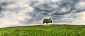 tree in the meadow (163) panorama format