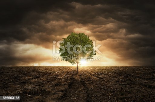 Single tree left on the cut out forest field over dramatic sky with copy space