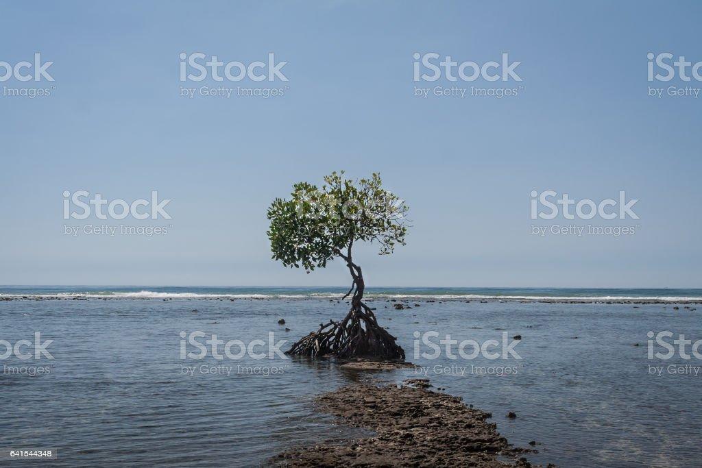 Lonely tree foto