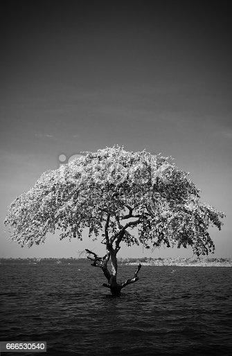 istock Lonely Tree 666530540
