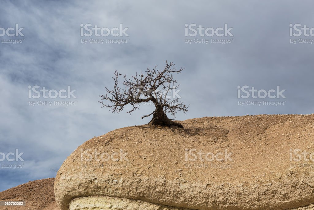 Lonely tree foto stock royalty-free