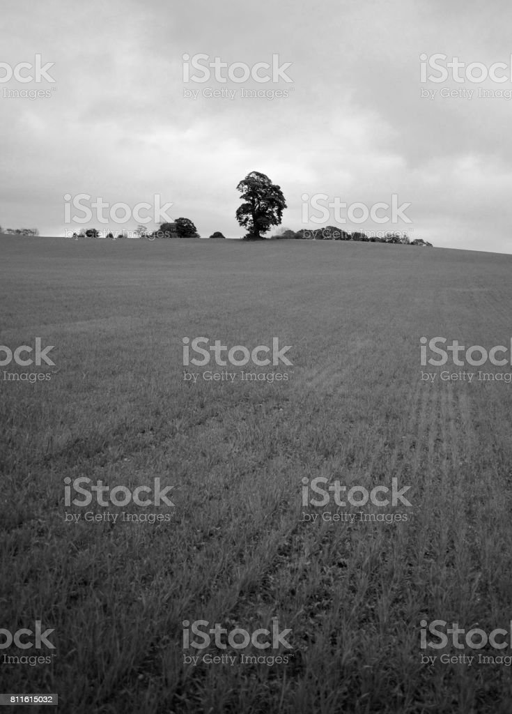 A lonely tree stock photo