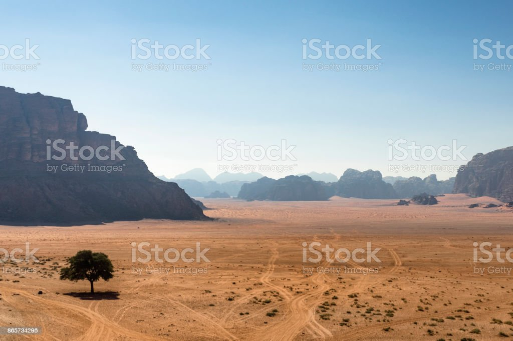 Yalnız ağaç royalty-free stock photo