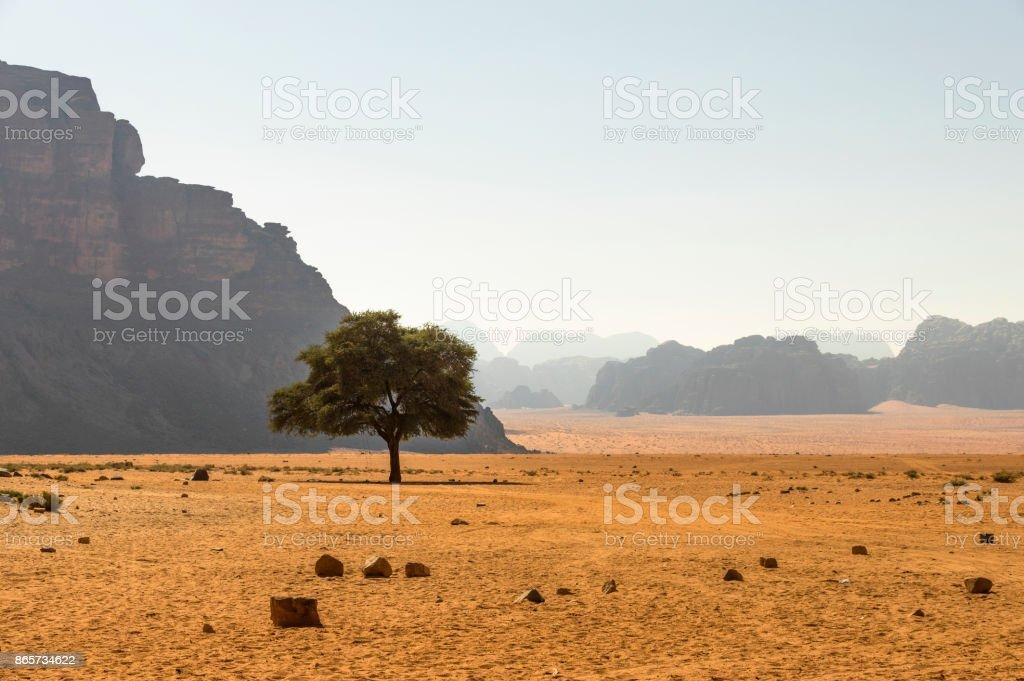 Yalnız ağaç stok fotoğrafı
