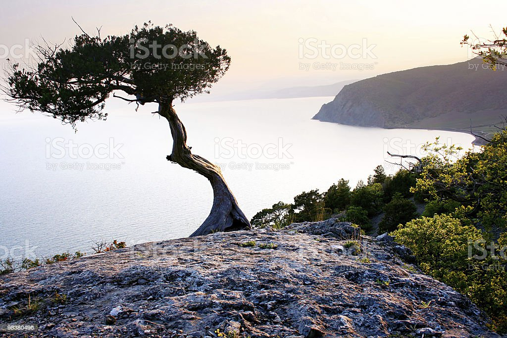 Albero solitario foto stock royalty-free