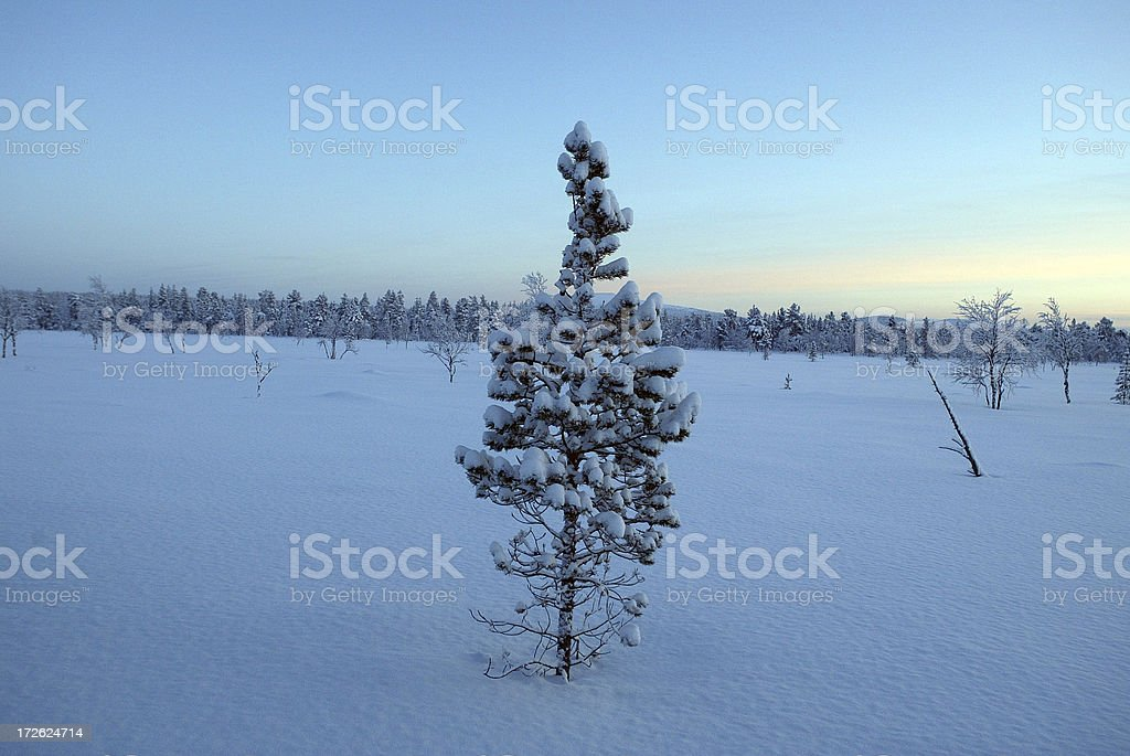Lonely Tree Winter Landscape royalty-free stock photo