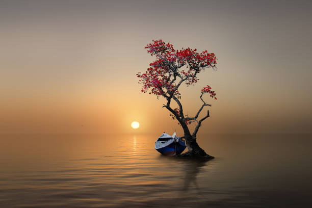 Lonely tree with a boat in sunset stock photo