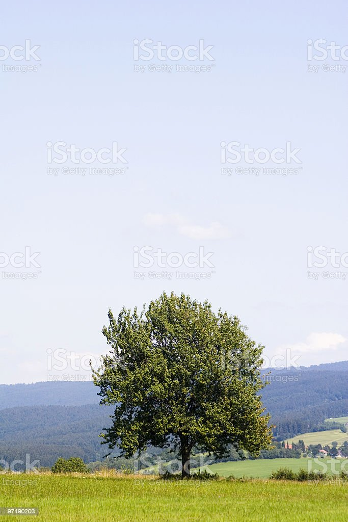 Lonely Tree with copy space royalty-free stock photo