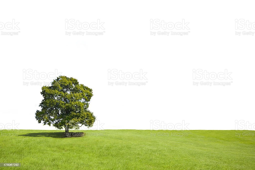 Lonely tree with shadow in a grass field stock photo
