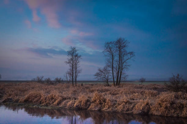 samotne drzewa o poranku – zdjęcie