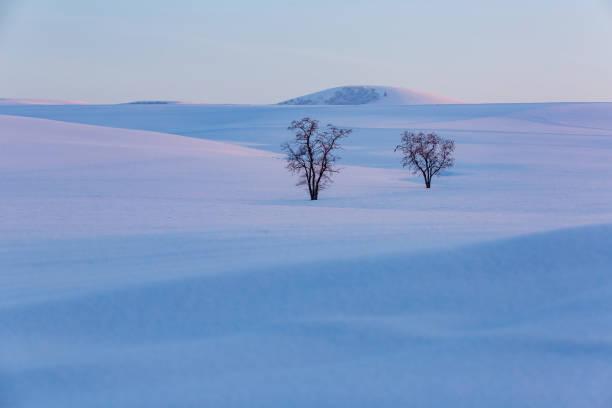 Lonely trees stock photo