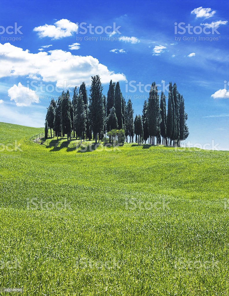 Lonely trees royalty-free stock photo