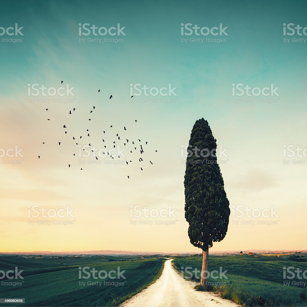 Lonely Tuscany Road stock photo
