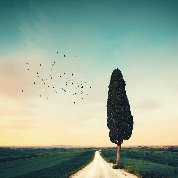 lonely tuscany road - cypress tree stock photos and pictures