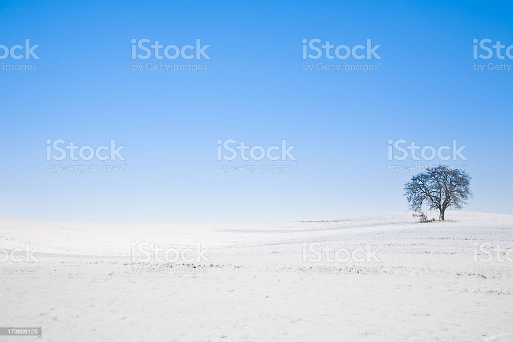 lonely winter tree landscape royalty-free stock photo