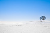 lonely winter tree under blue sky. copy space.