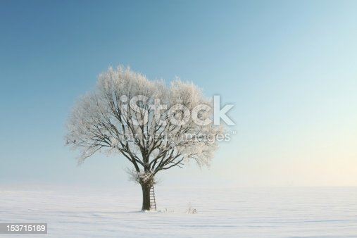 1034754000 istock photo Lonely winter tree 153715169